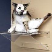 perspex-shelf-v68250